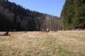 Picknick Wiese