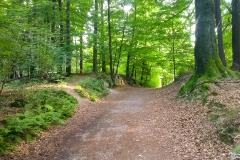 Auf-dem-Weg-zur-Bastei