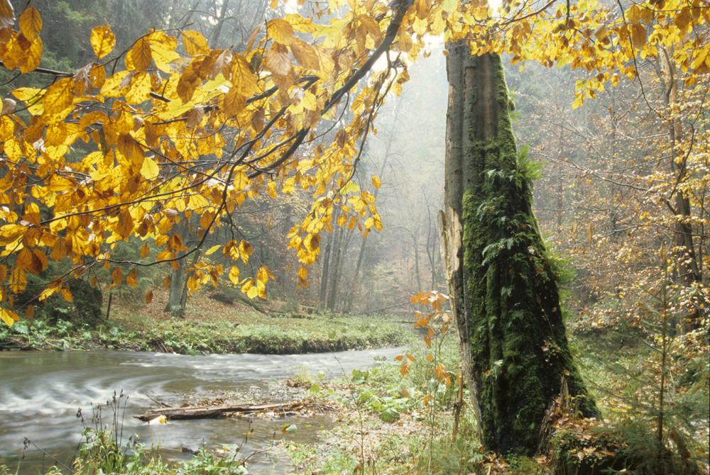 Herbst im Polenztal © Frank Exß