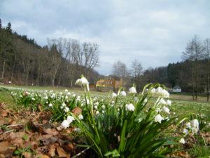 Märzenbecher Wiesen Wanderung Polenztal
