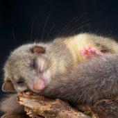 Tiere im Elbsandsteingebirge – wer wohnt wo?