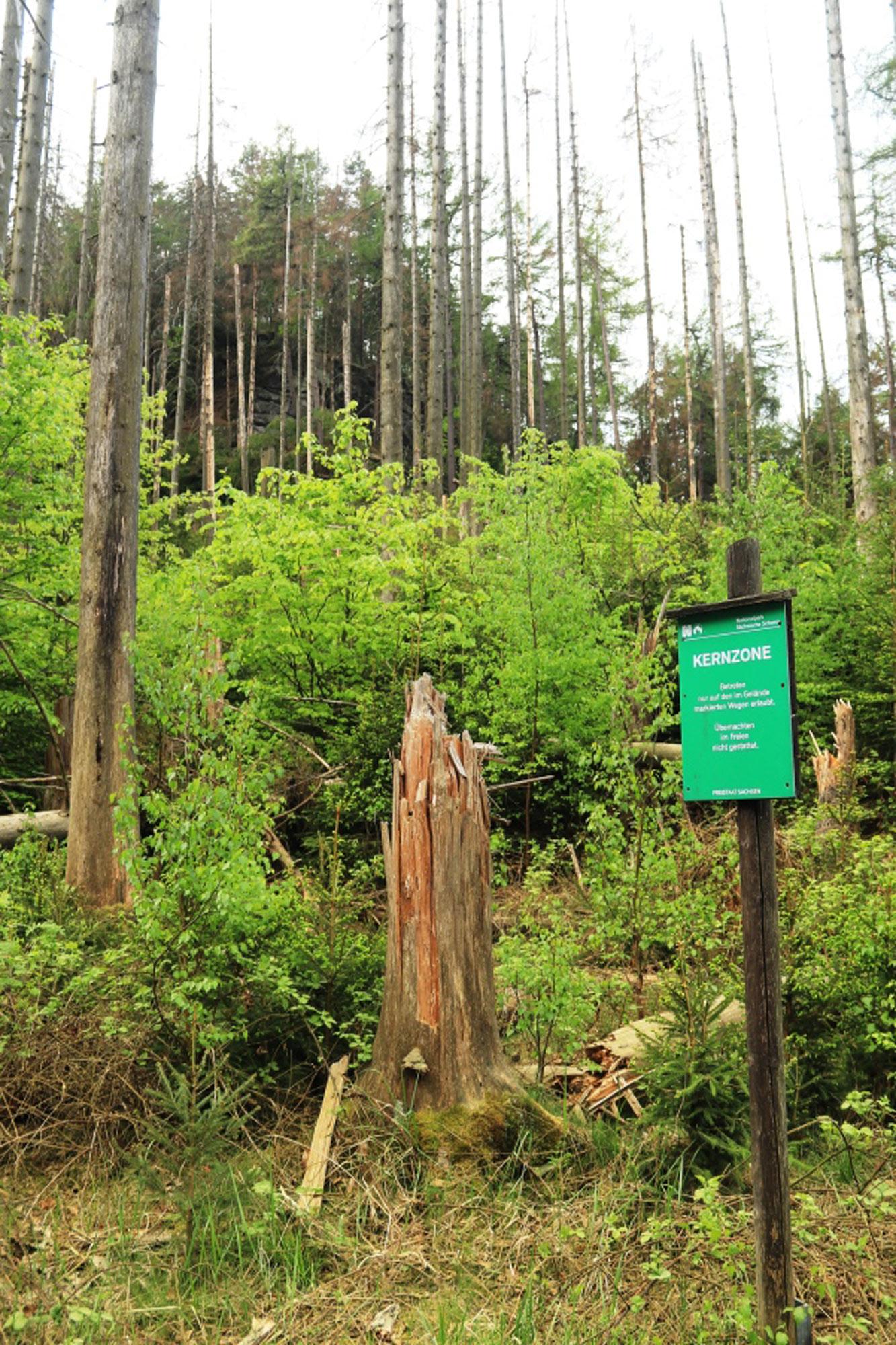 Im Schutz der Stämme wächst von alleine der neue Wald mit bis zu zwölf Baumarten heran.
