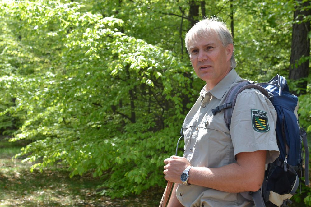 Forest path Elbsandstein Forester Christian Schmidt (c) ThielPR, Angela Zimmerling