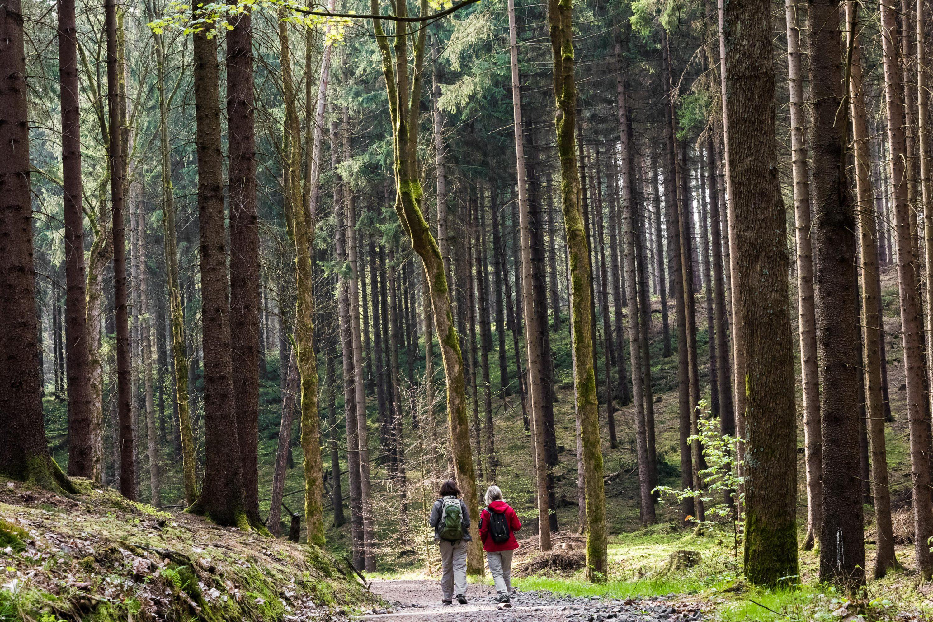 Wanderung Wilde Klamm (c) ThielPR, Sebastian Thiel